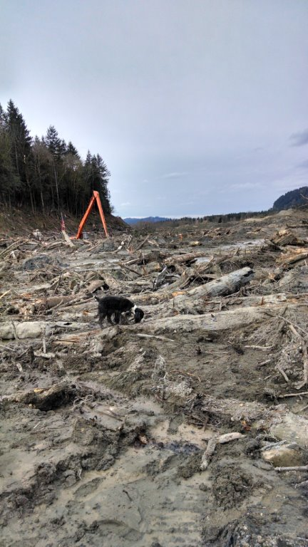 Quincy at Oso Mud Slide